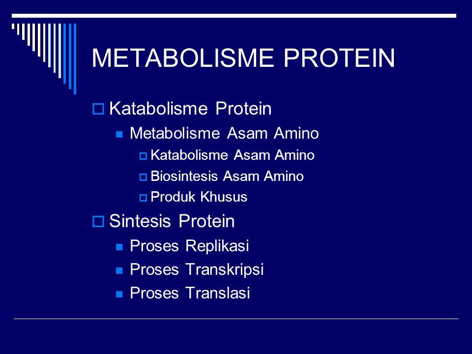 METABOLISME PROTEIN Katabolisme Protein Sintesis Protein