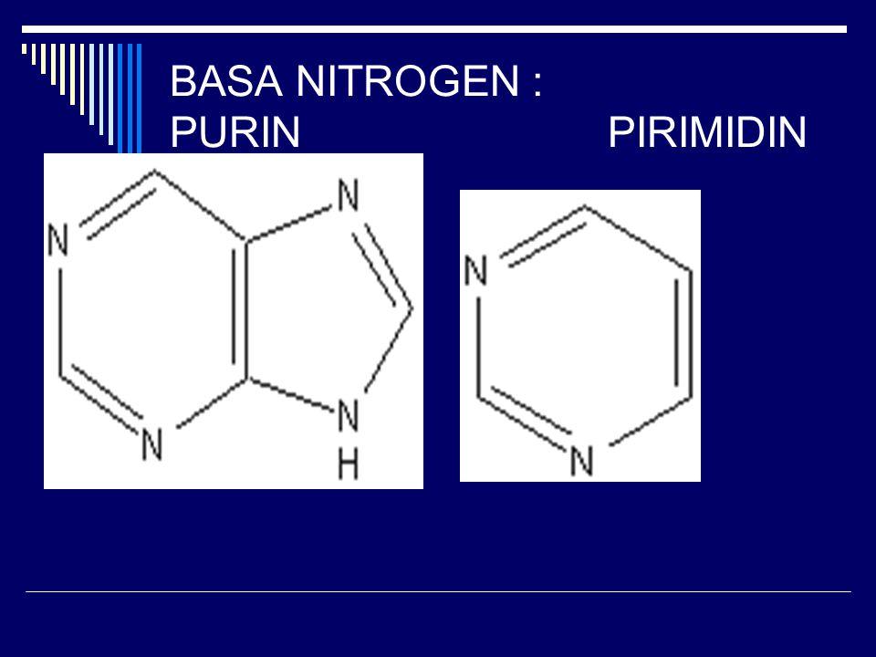 BASA NITROGEN : PURIN PIRIMIDIN