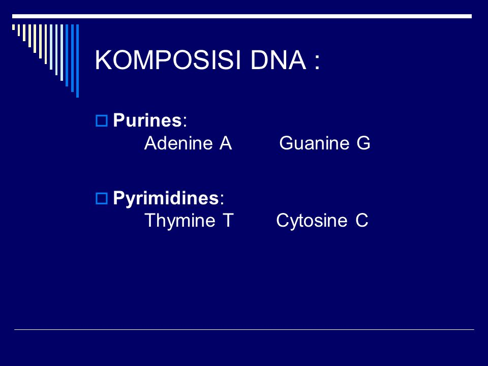 KOMPOSISI DNA : Purines: Adenine A Guanine G