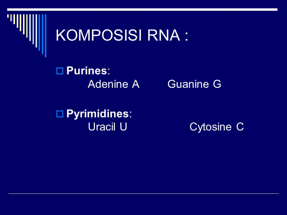 KOMPOSISI RNA : Purines: Adenine A Guanine G