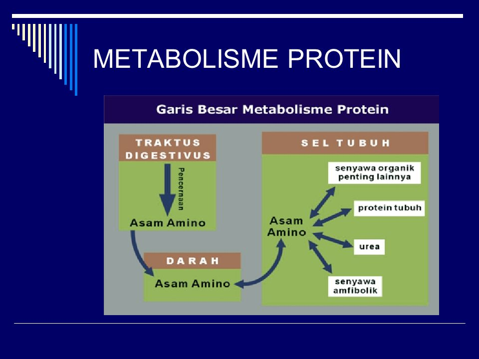 protein metabolism Protein turnover is the balance between protein synthesis and protein degradation proteins are naturally occurring polymers made up of repeating units of 20 different amino acids and range from small peptide hormones of 8 to 10 residues to very large multi-chain complexes of several thousand amino.