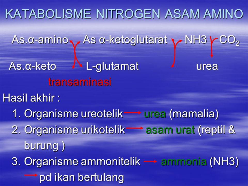KATABOLISME NITROGEN ASAM AMINO