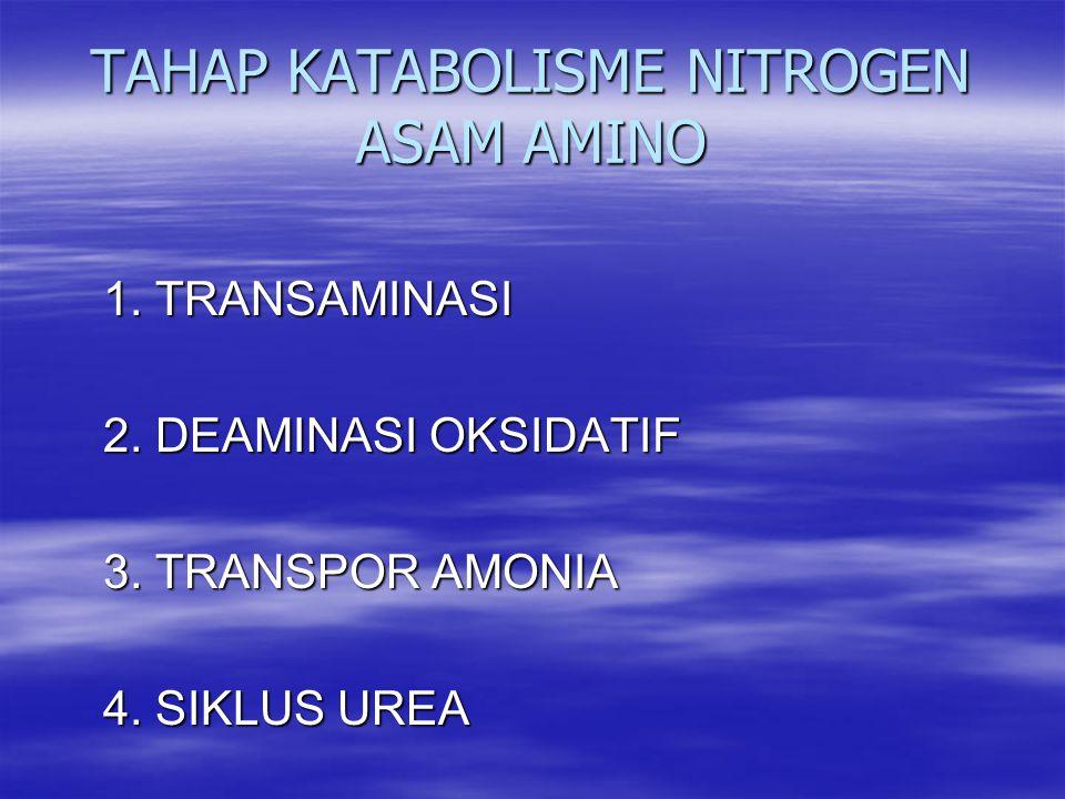 TAHAP KATABOLISME NITROGEN ASAM AMINO