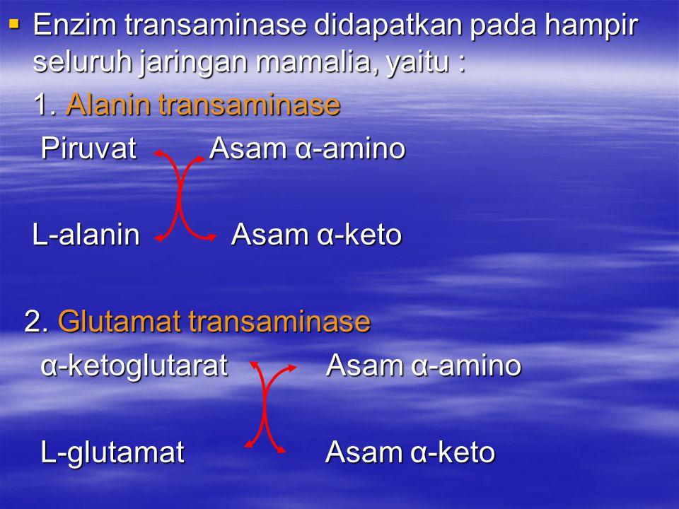 Enzim transaminase didapatkan pada hampir seluruh jaringan mamalia, yaitu :