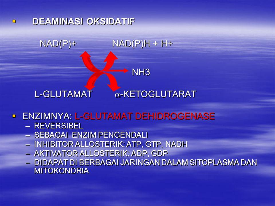 L-GLUTAMAT -KETOGLUTARAT ENZIMNYA: L-GLUTAMAT DEHIDROGENASE