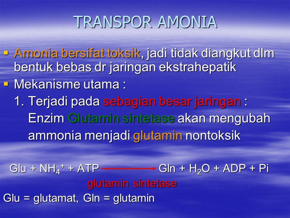 TRANSPOR AMONIA Amonia bersifat toksik, jadi tidak diangkut dlm bentuk bebas dr jaringan ekstrahepatik.
