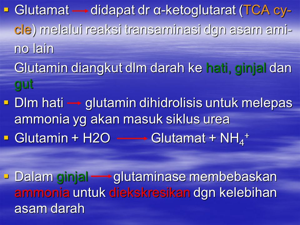 Glutamat didapat dr α-ketoglutarat (TCA cy-