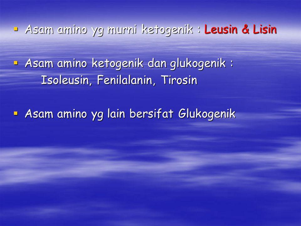 Asam amino yg murni ketogenik : Leusin & Lisin