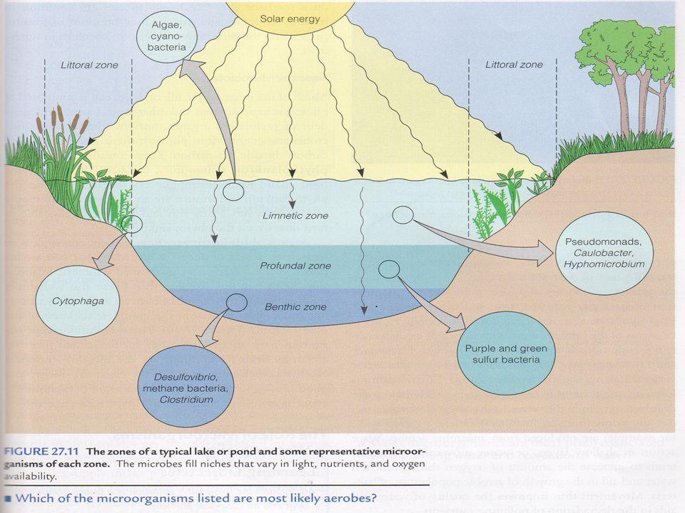 Kelompok mikroba perairan
