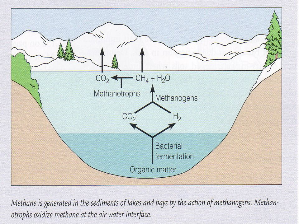 Alasan kajian mikroorganisme perairan semakin penting