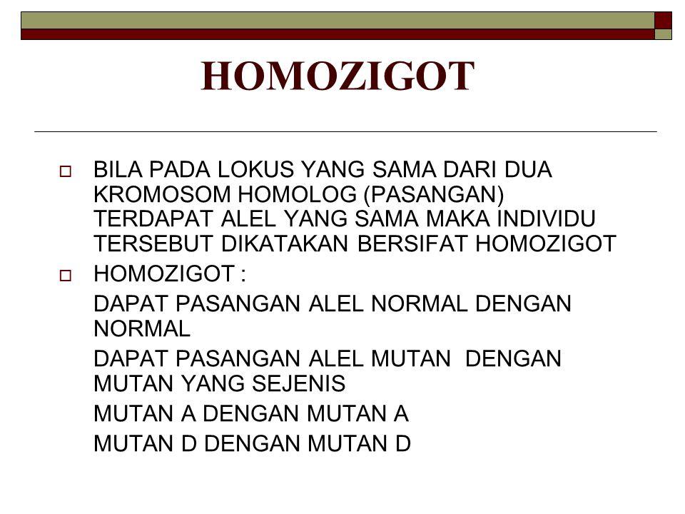 HOMOZIGOT BILA PADA LOKUS YANG SAMA DARI DUA KROMOSOM HOMOLOG (PASANGAN) TERDAPAT ALEL YANG SAMA MAKA INDIVIDU TERSEBUT DIKATAKAN BERSIFAT HOMOZIGOT.