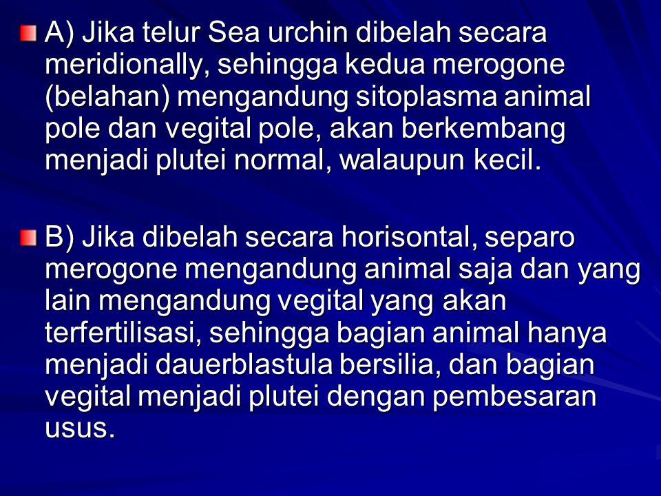 A) Jika telur Sea urchin dibelah secara meridionally, sehingga kedua merogone (belahan) mengandung sitoplasma animal pole dan vegital pole, akan berkembang menjadi plutei normal, walaupun kecil.