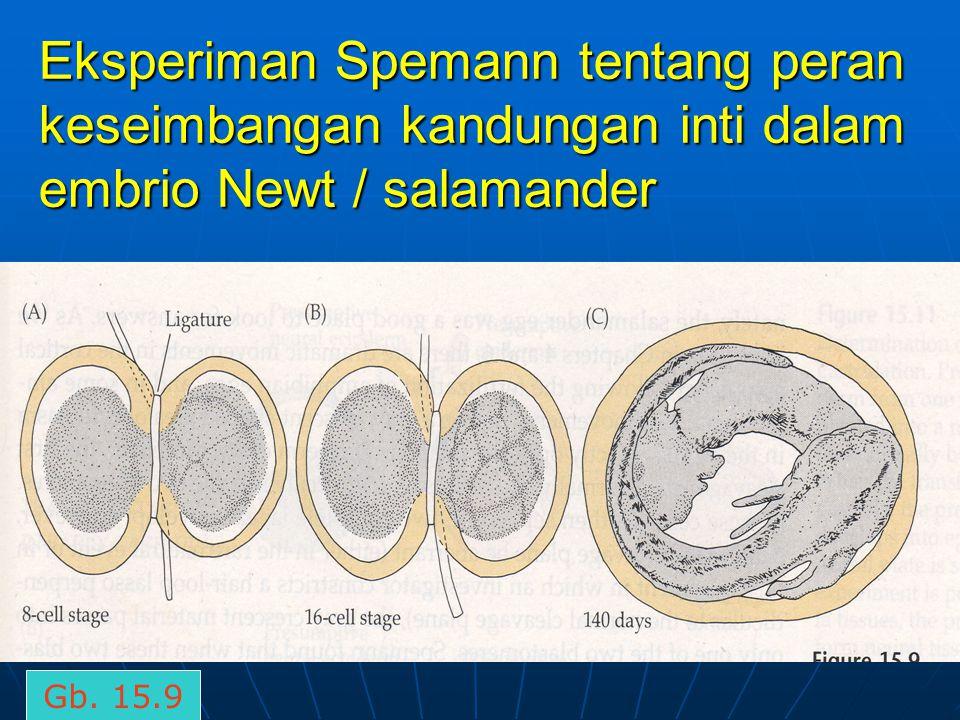 Eksperiman Spemann tentang peran keseimbangan kandungan inti dalam embrio Newt / salamander