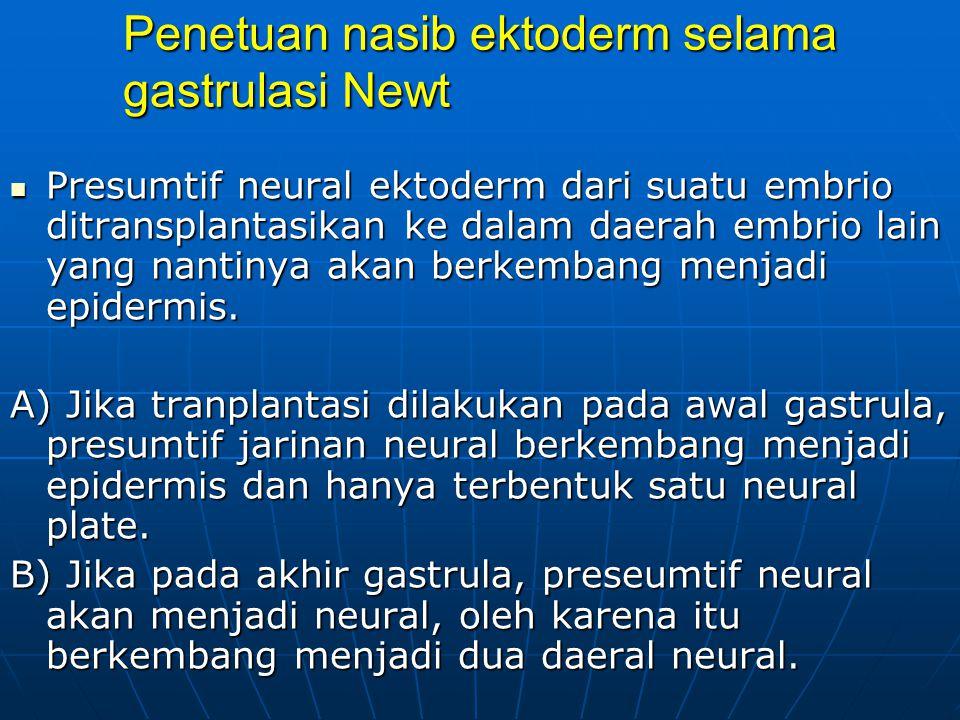 Penetuan nasib ektoderm selama gastrulasi Newt