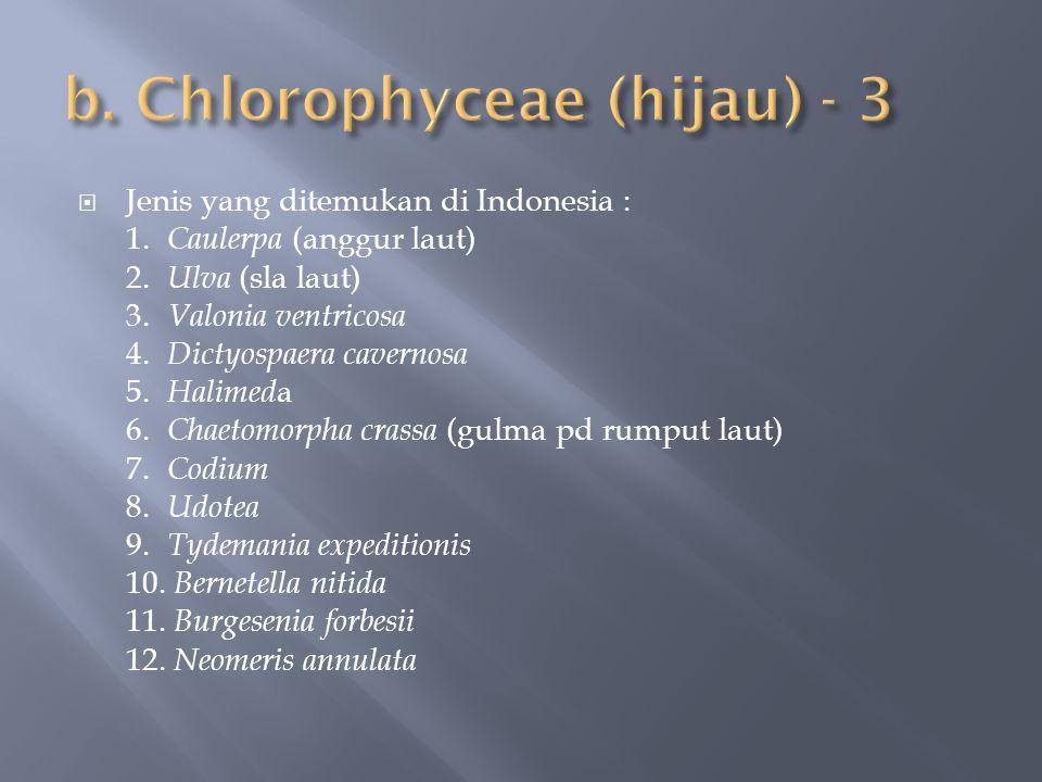 b. Chlorophyceae (hijau) - 3