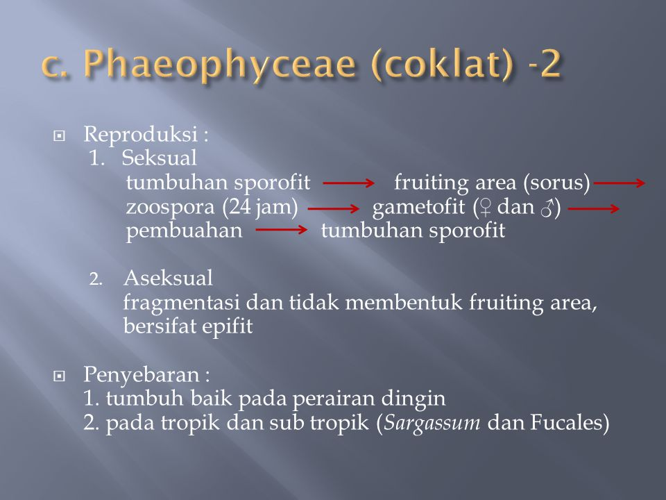 c. Phaeophyceae (coklat) -2