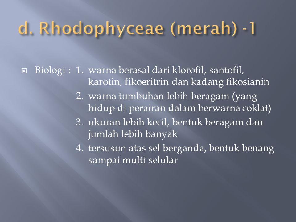 d. Rhodophyceae (merah) -1