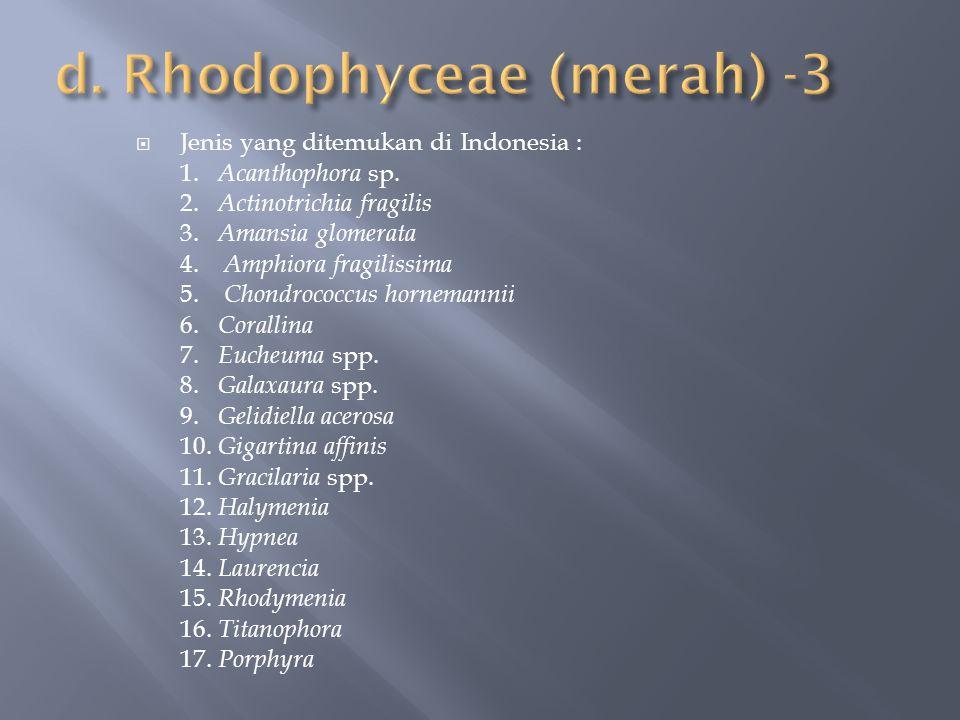 d. Rhodophyceae (merah) -3