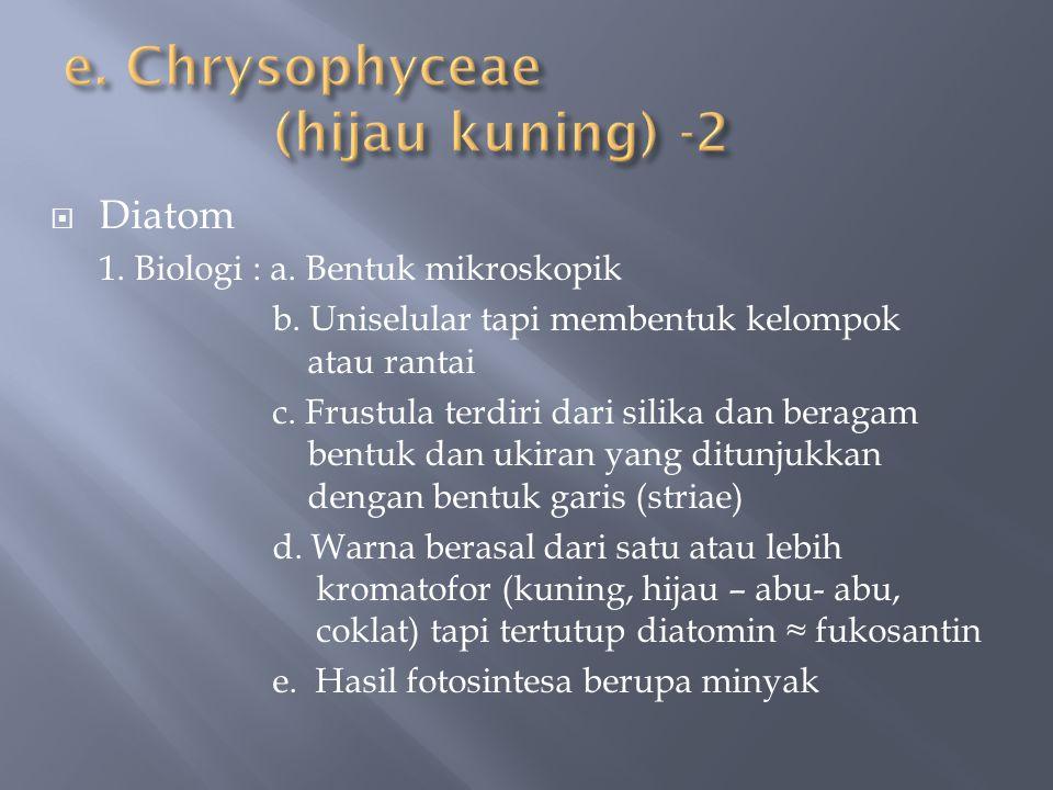 e. Chrysophyceae (hijau kuning) -2