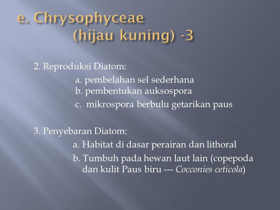 e. Chrysophyceae (hijau kuning) -3