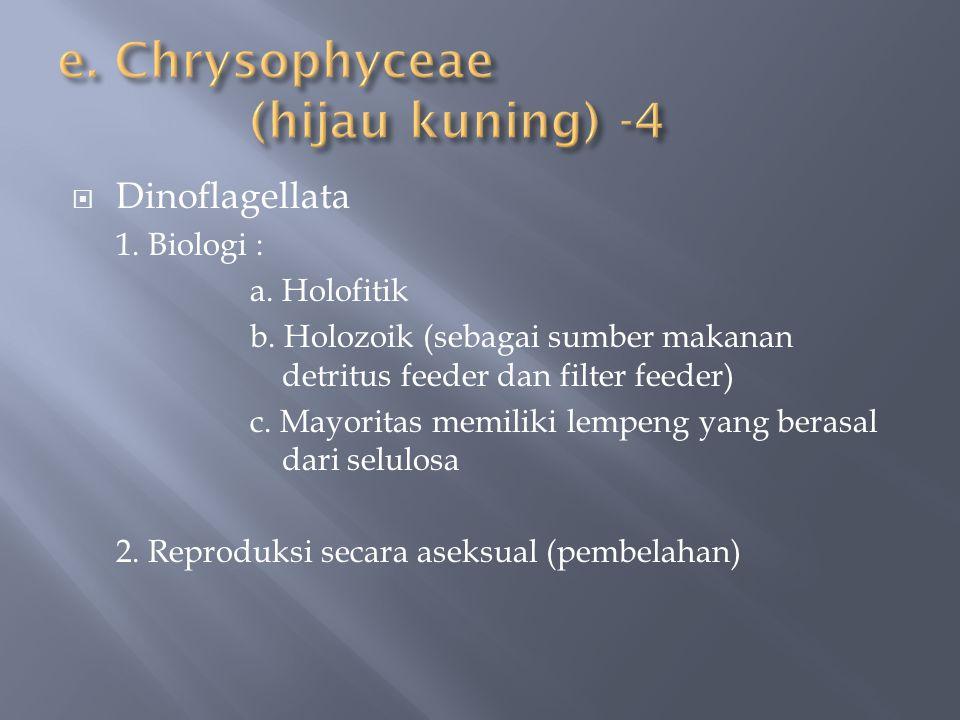 e. Chrysophyceae (hijau kuning) -4