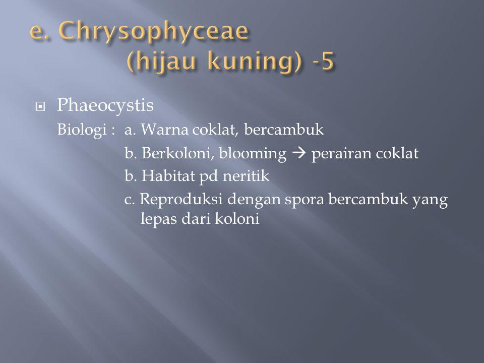 e. Chrysophyceae (hijau kuning) -5
