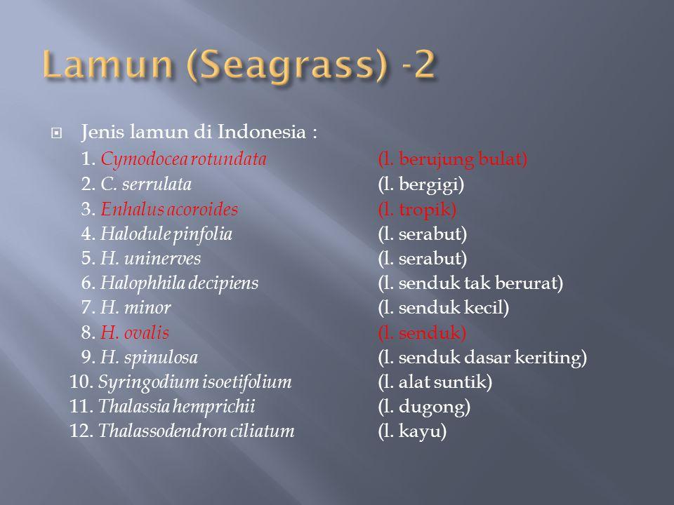 Lamun (Seagrass) -2 Jenis lamun di Indonesia :
