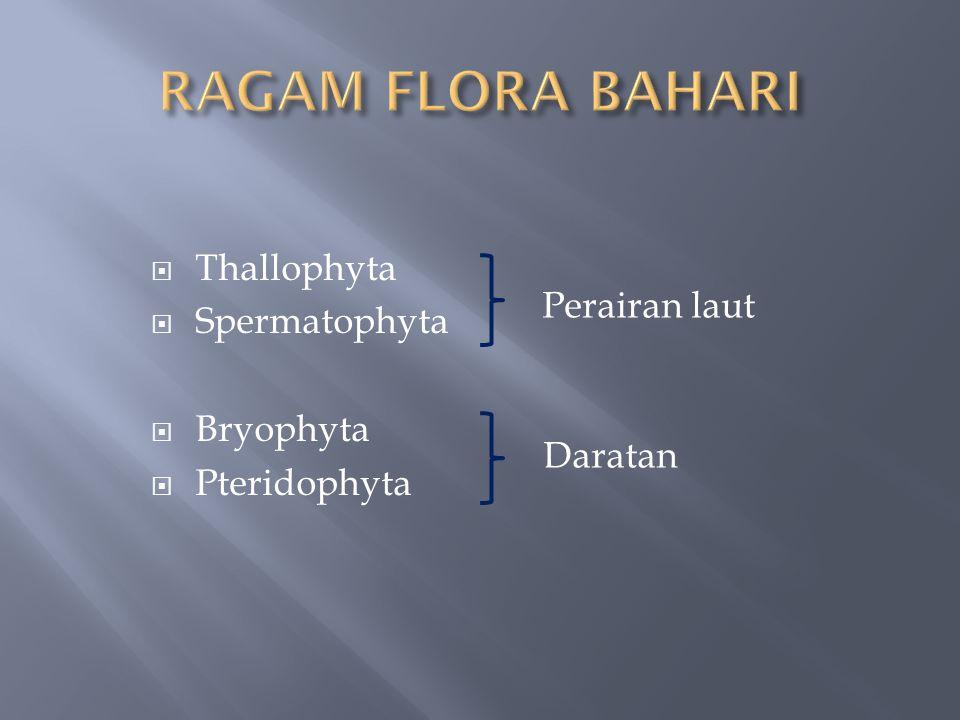 RAGAM FLORA BAHARI Thallophyta Spermatophyta Perairan laut Bryophyta