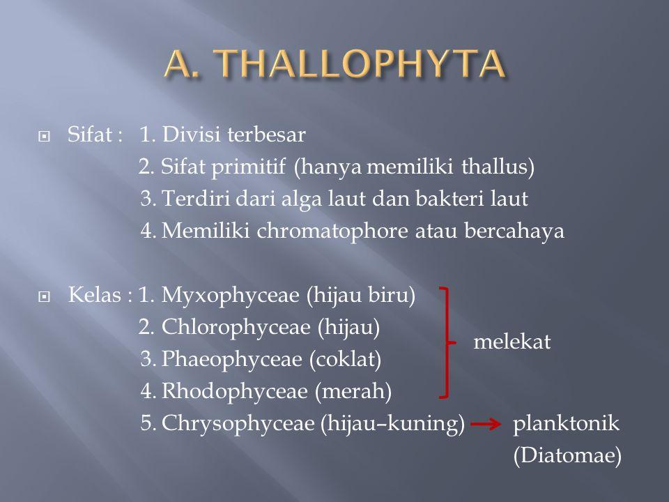 A. THALLOPHYTA Sifat : 1. Divisi terbesar