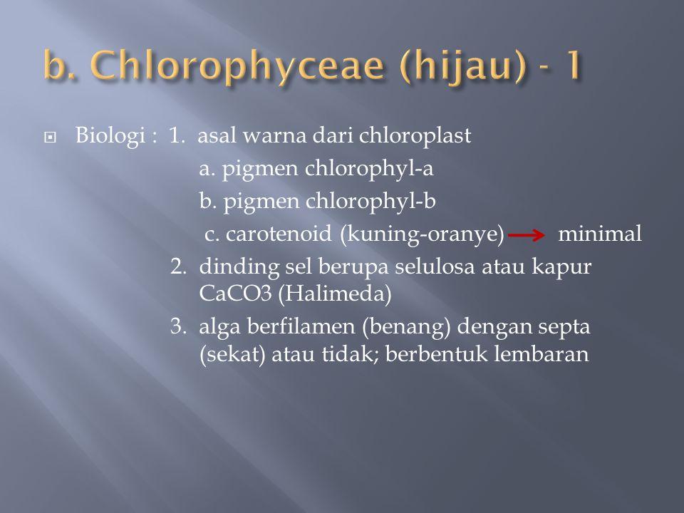 b. Chlorophyceae (hijau) - 1