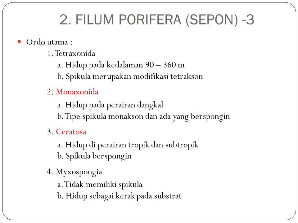 2. FILUM PORIFERA (SEPON) -3