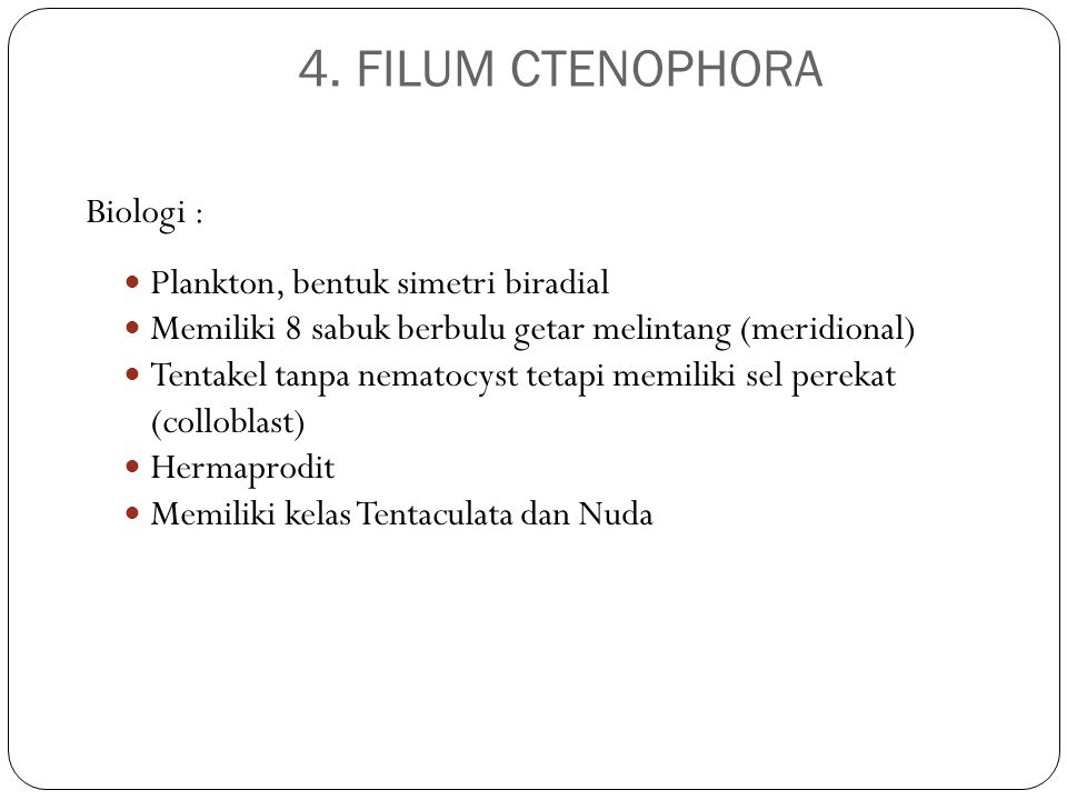 4. FILUM CTENOPHORA Biologi : Plankton, bentuk simetri biradial