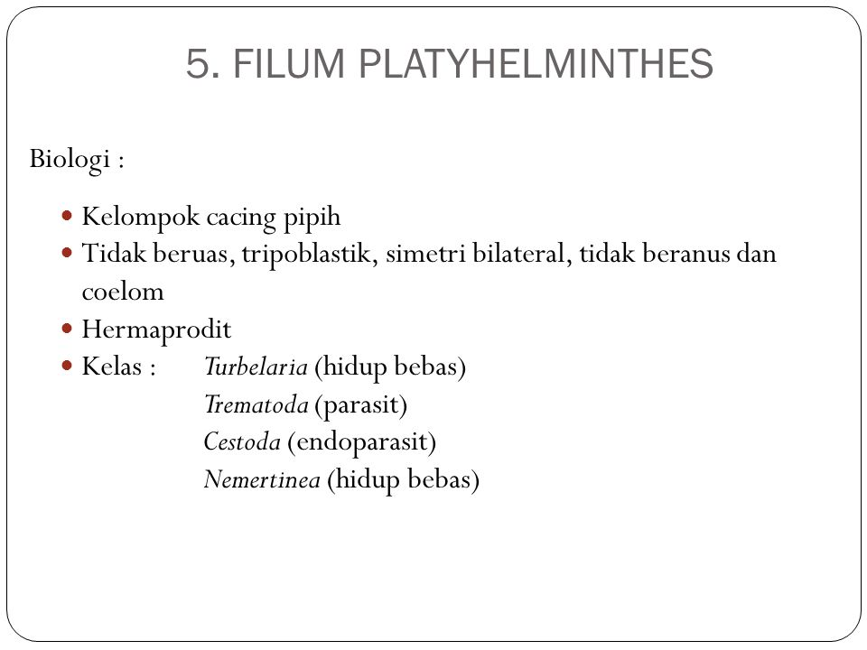 5. FILUM PLATYHELMINTHES