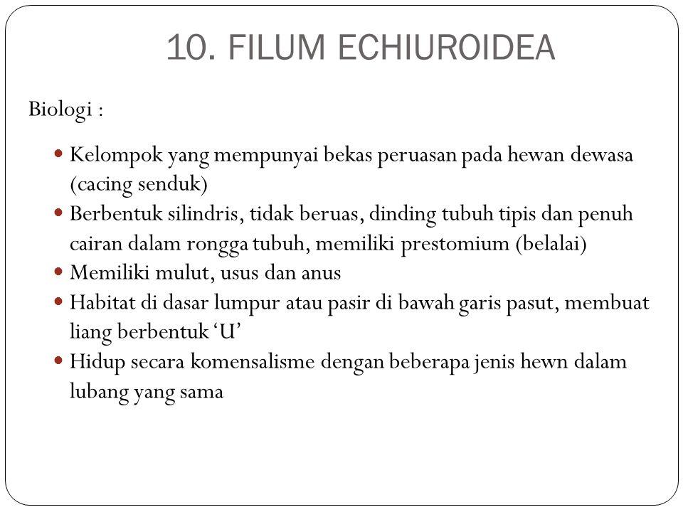 10. FILUM ECHIUROIDEA Biologi :