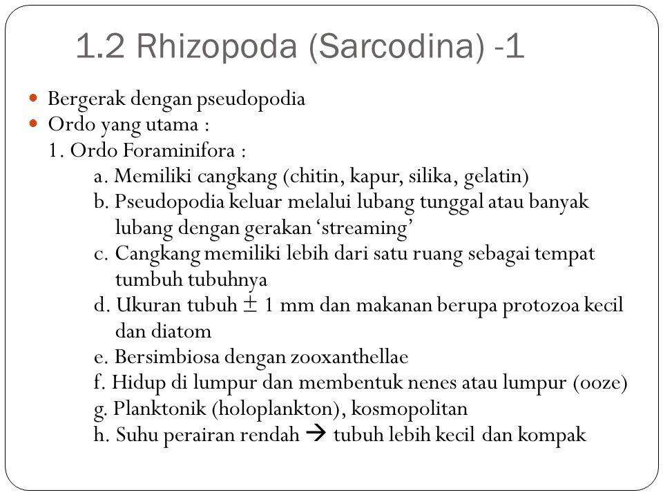 1.2 Rhizopoda (Sarcodina) -1