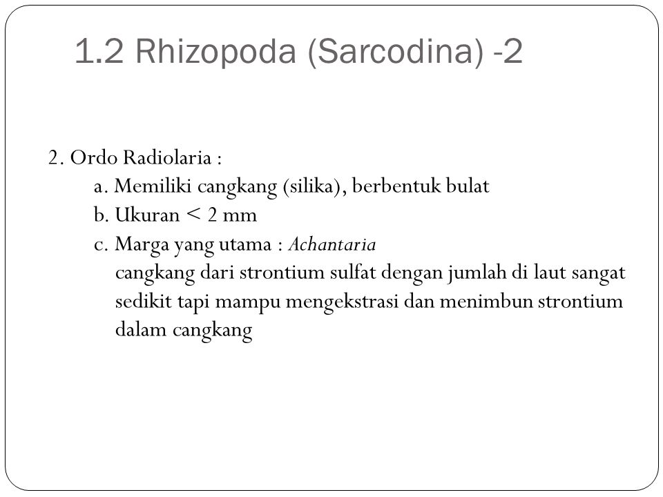 1.2 Rhizopoda (Sarcodina) -2