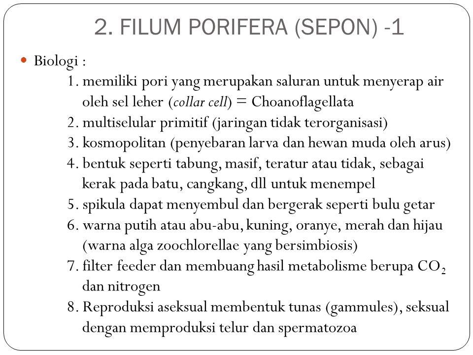 2. FILUM PORIFERA (SEPON) -1