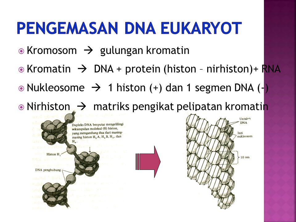 PENGEMASAN DNA EUKARYOT