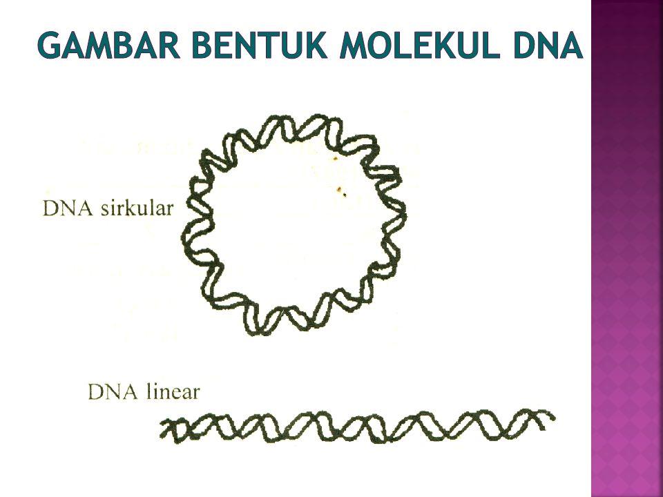 Gambar Bentuk Molekul DNA