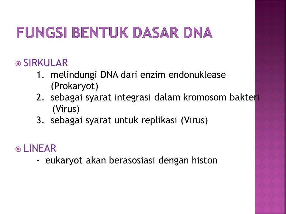 FUNGSI BENTUK DASAR DNA