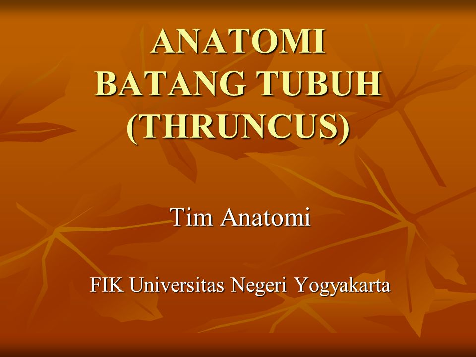 ANATOMI BATANG TUBUH (THRUNCUS)