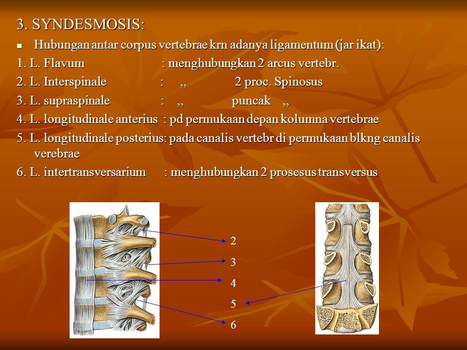 3. SYNDESMOSIS: Hubungan antar corpus vertebrae krn adanya ligamentum (jar ikat):