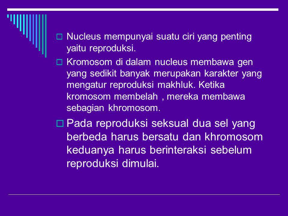 Nucleus mempunyai suatu ciri yang penting yaitu reproduksi.