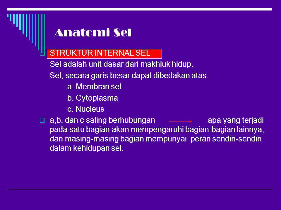 Anatomi Sel STRUKTUR INTERNAL SEL