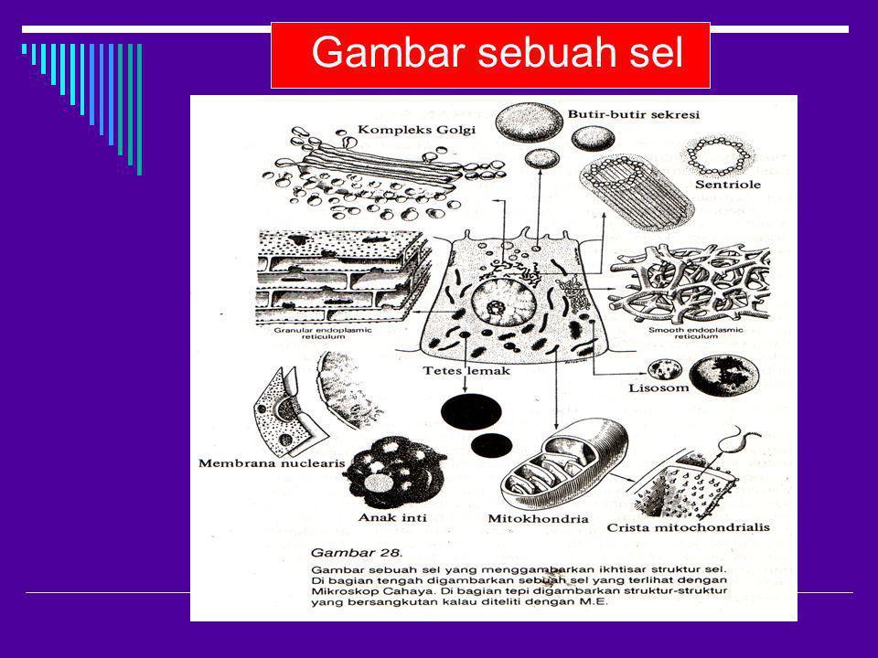 Gambar sebuah sel