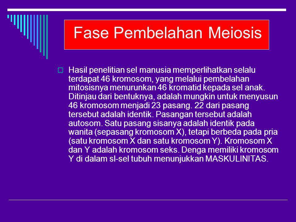 Fase Pembelahan Meiosis