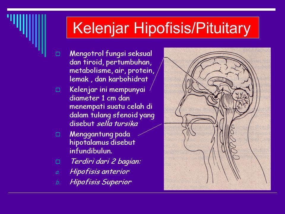 Kelenjar Hipofisis/Pituitary
