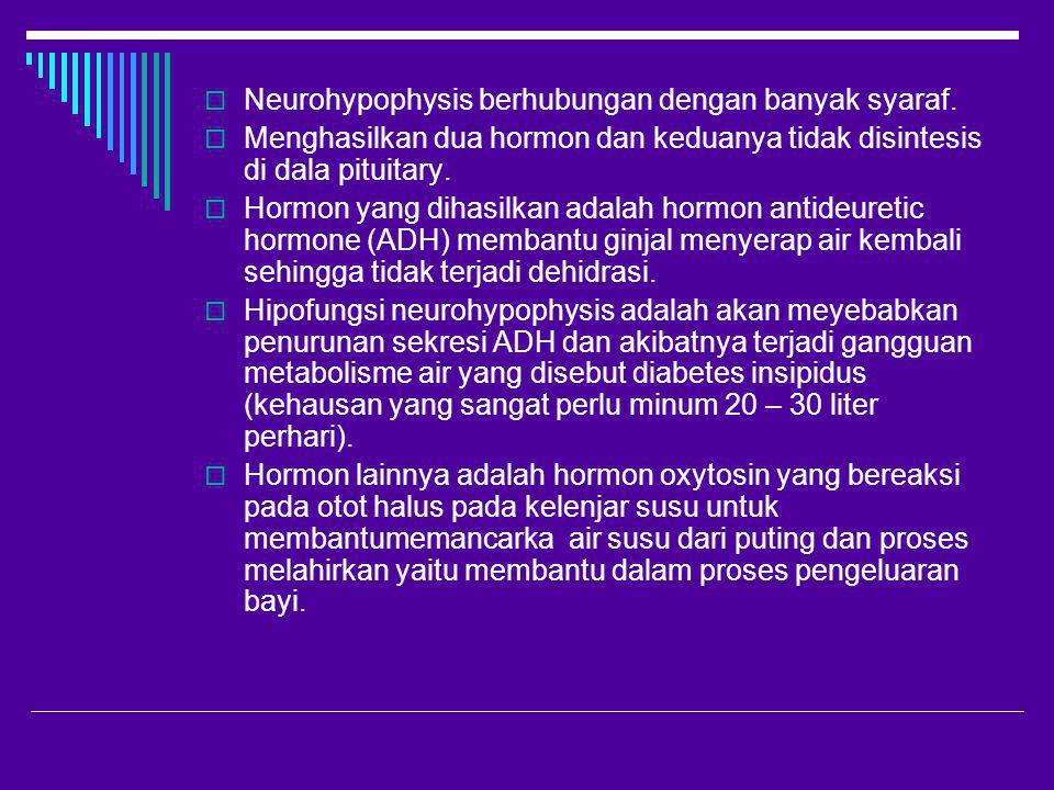Neurohypophysis berhubungan dengan banyak syaraf.