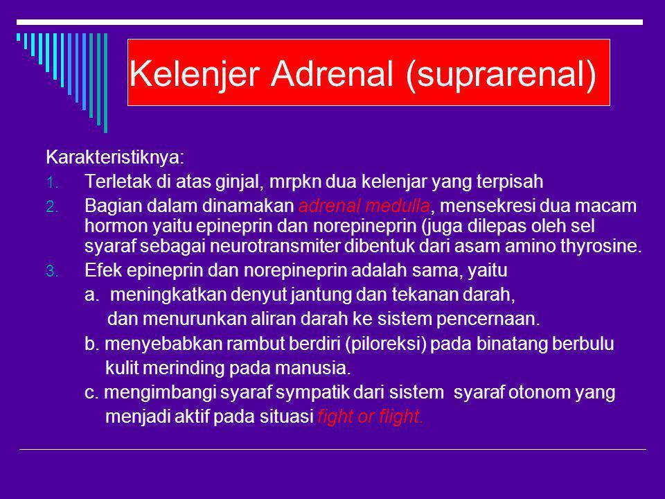 Kelenjer Adrenal (suprarenal)