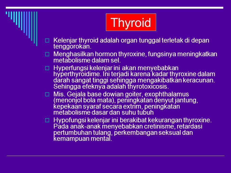 Thyroid Kelenjar thyroid adalah organ tunggal terletak di depan tenggorokan.